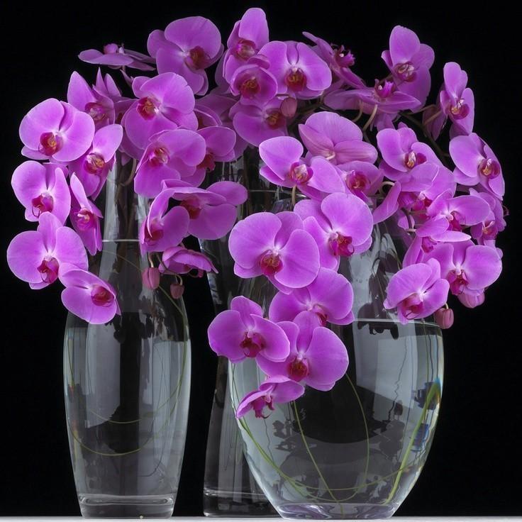 Открытки с днем рождения женщине красивые с орхидеями мерцающие, гневе
