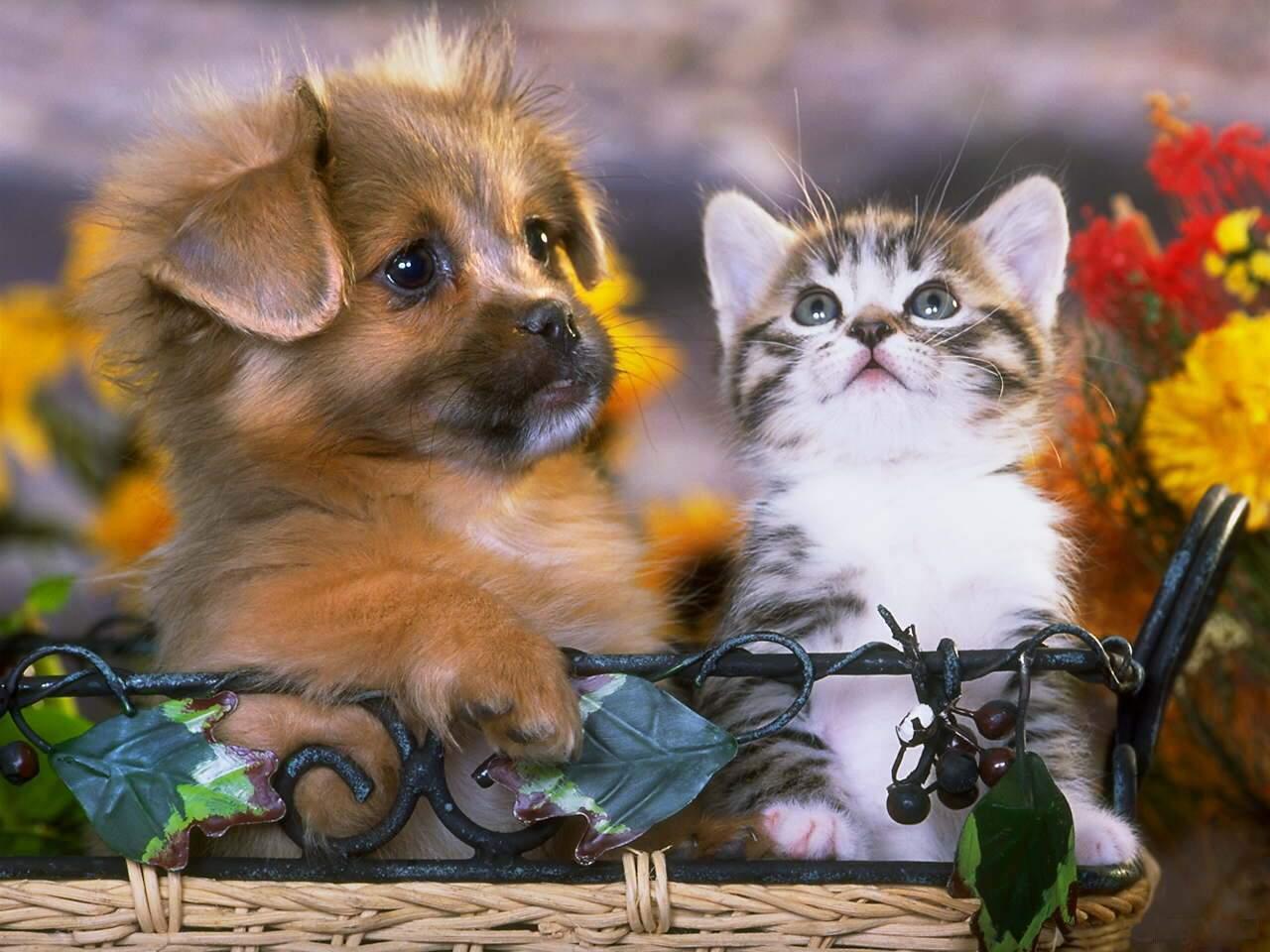 открытка с милыми животными она